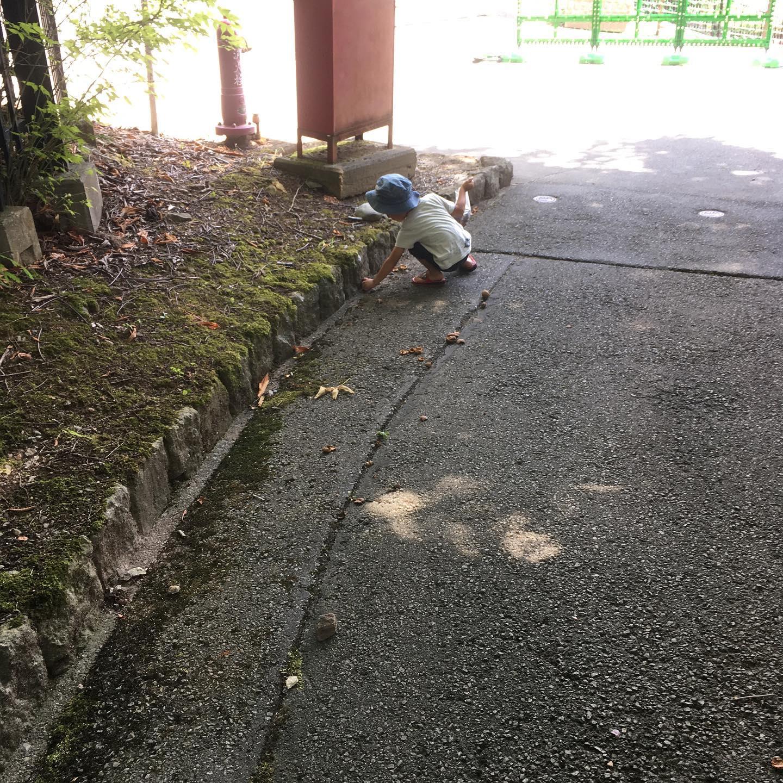 遅めの夏休み。茶臼山動物園ではひたすらトチの実ひろい。キリン見れなかった。宿はエアビーでコテージとったらかなりよい!あたり!!