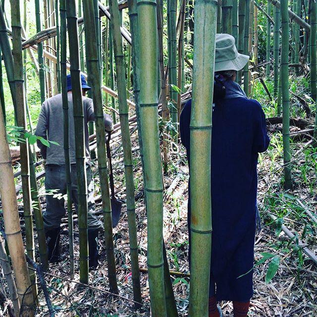 今朝はマスヤ夫婦と竹の子を見つけにでましたが#見つかりませんでした。しかし竹藪の中は気持ちが良いものだ。