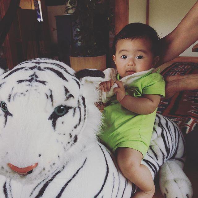 拓次、トラに乗る。