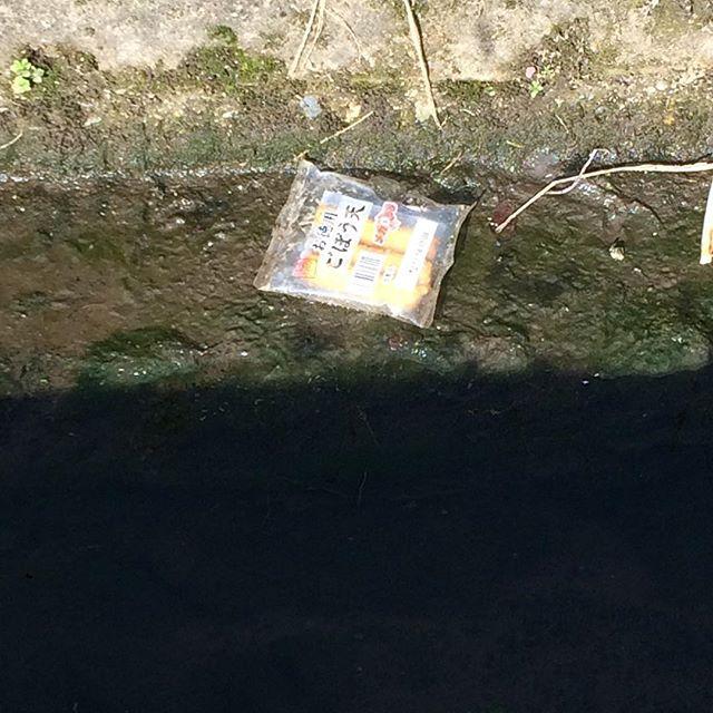 そういえばみなさまにお伝えし忘れてることがありました。本当にすみません。あの、津山の排水口にはこういうものが落ちてるんですよ。