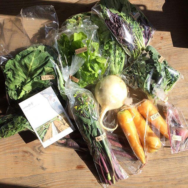 野菜を贈ることはあっても贈られることは少なくなっていた近年ピカピカの野菜届いた〜! きれいだなぁ。ありがとういっしー、みやちゃん