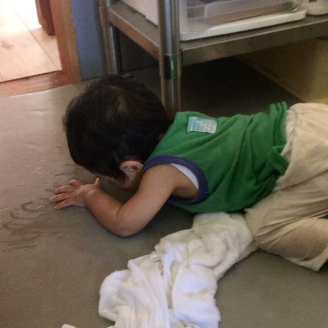 床にこぼしたコーヒー飲んでる。