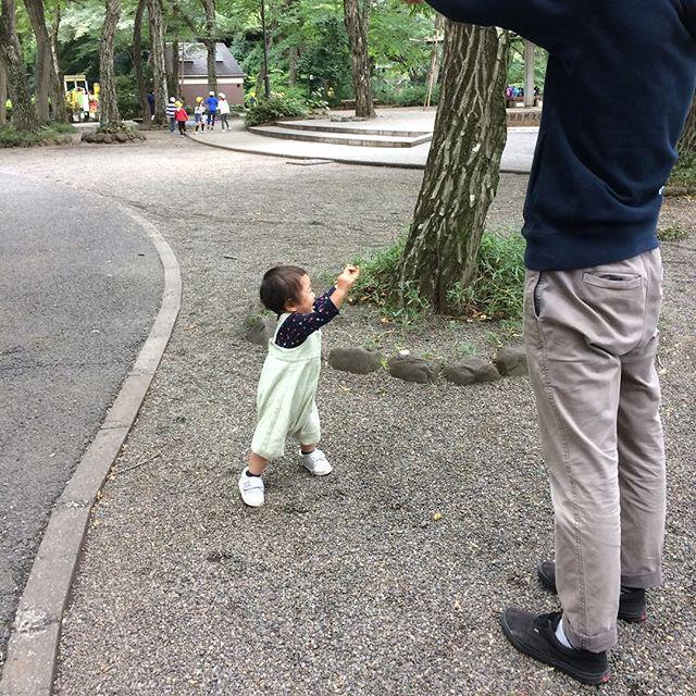 トーキョー最終日は吉祥寺パトロールでした。昨日行けなかったから井の頭動物園行ったけど、一番楽しそうにしてたのは砂利スペース。家で出来る。東京は1年に1〜2回くるくらいで十分かな!お疲れ様でした。