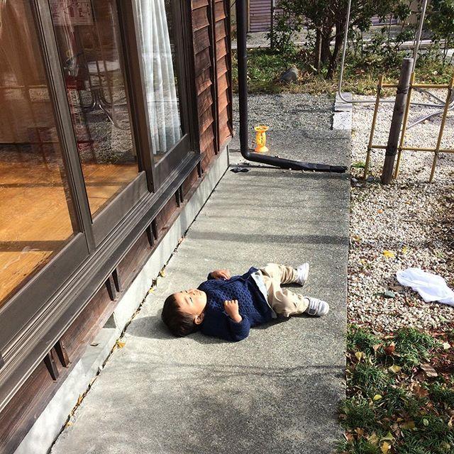晴れた日は寒くても日光浴が気持ちいいんだよな〜こうやってなぁ〜 ※転んでるわけでも死んでるわけでも無い