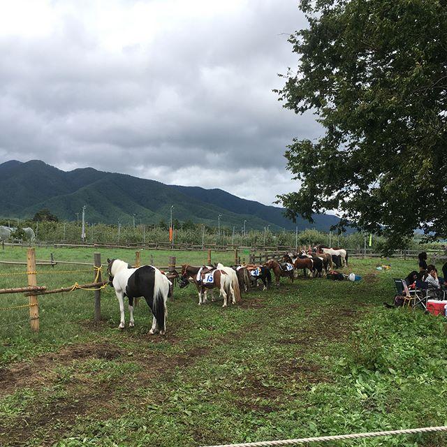 パカパカ塾の、パカパカ草競馬。りんご畑に囲まれた馬場で可愛いお馬さんたち頑張ってました!私たちの代が誕生させた飛鳥も頑張ってたー!春日先生も変わりなく、小学校の頃の同級生もたくさんあえて、馬にも乗れるし親子共々のびのびできました。私の中で幻のタイキにも会えたのが一番の収穫︎ つーかたくじ、パカパカ塾いれようかな…