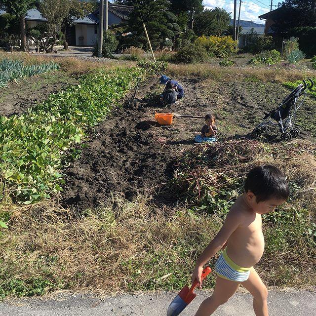 エミちゃんちの芋掘り2019.秋