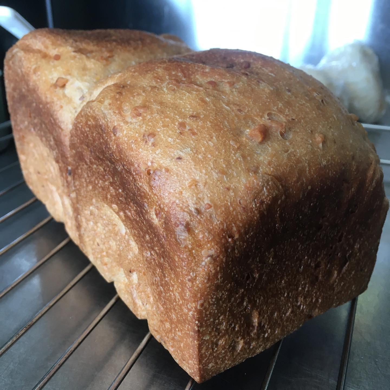 来週ご注文頂いたのでウォールナッツブレッドの一斤型の試作。一次発酵を意識して…温度を調整して…蓋して焼いたら頭のところが潰れてしまったけどうまいぞ!